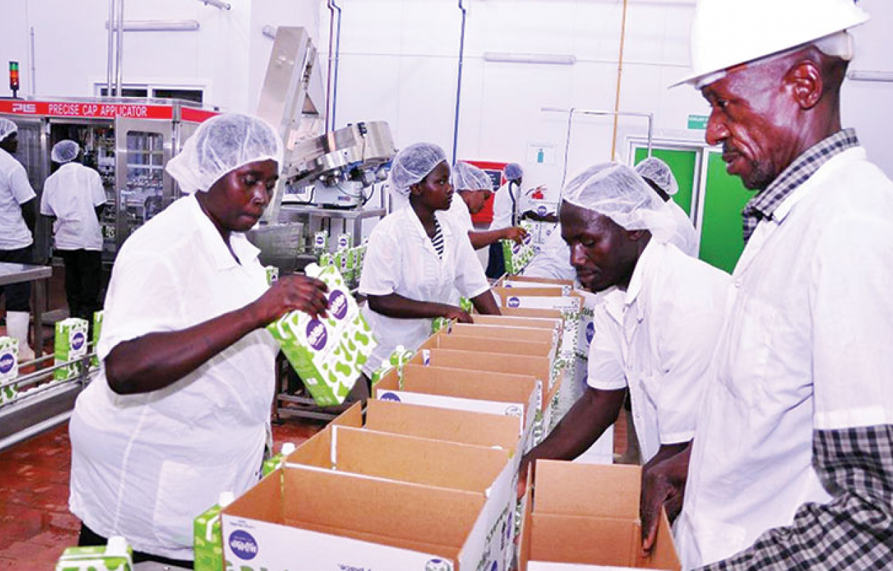 How new dairy company has transformed lives in Rushere
